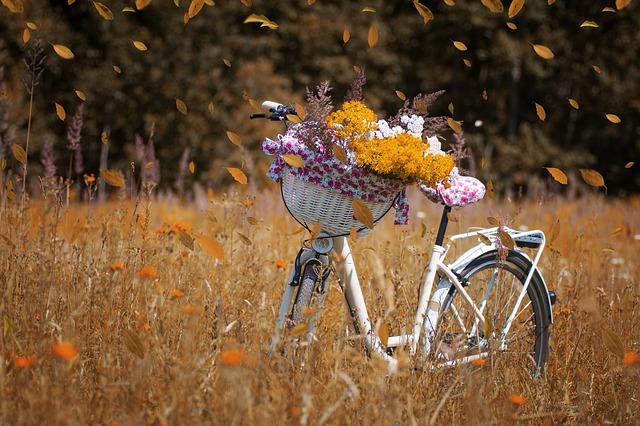 Un rêve de vélo : conseils pour réussir son projet d'entreprise